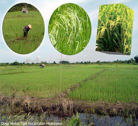 pertanian1